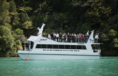 Ship Cone Marlborough Sounds